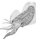 cuttle fish thumbnail